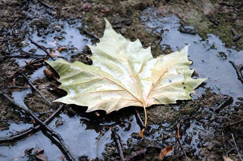 Hoja bajo la lluvia